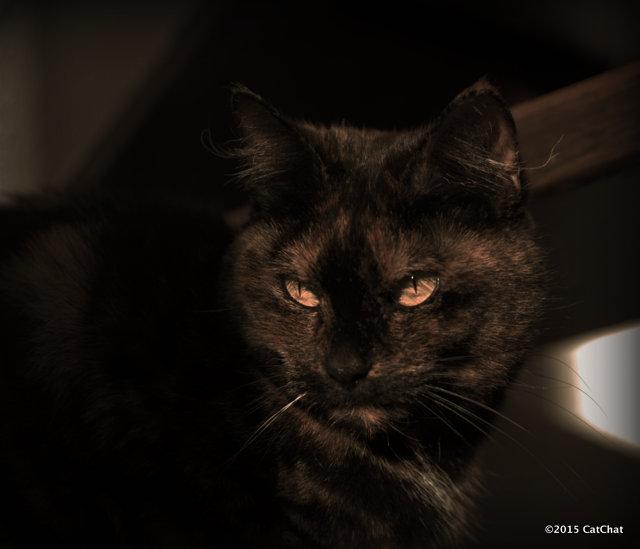 Looking Grumpy by Amalphi