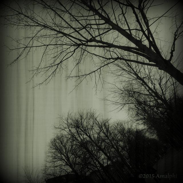 Sad Tree by Amalphi