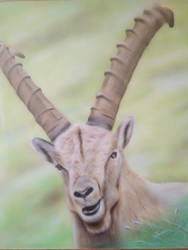 Ibex airbrush on MDF 50x60
