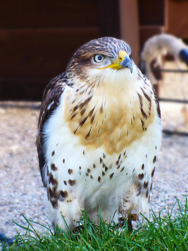 Sejafin's Profile Picture