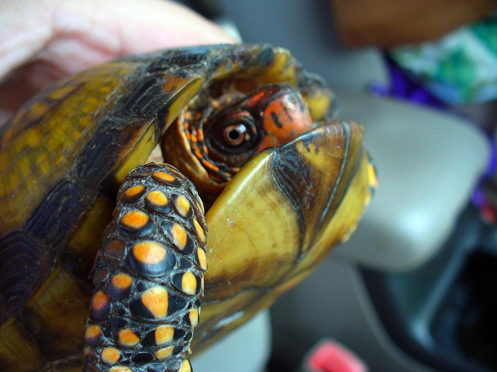 Rainbow Turtle | Tiny Zoo Wiki | Fandom powered by Wikia