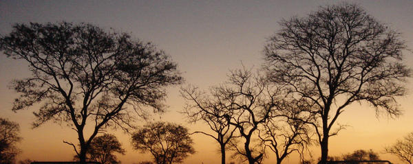 EsqueletonTrees by RoccS