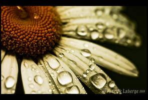 Rain Day by CureBoy