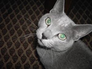 nudagimo's Profile Picture