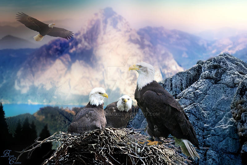Save the animals and the nature Eagles 2016 by nudagimo