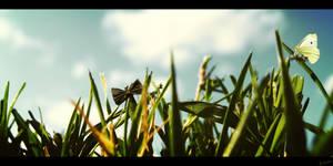 Lepidoptera