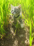 A little and cute kitty  Haku