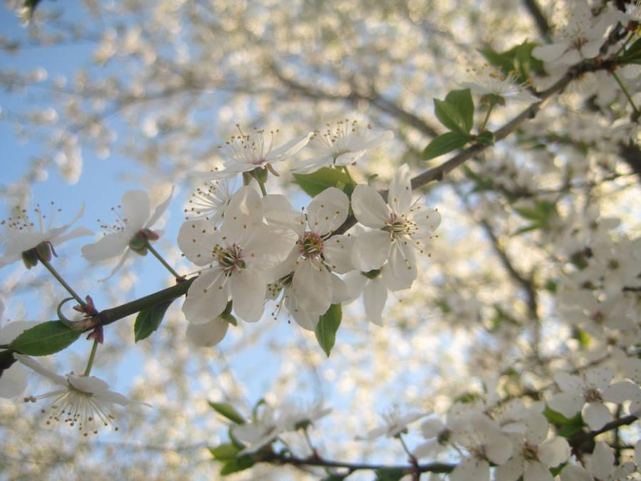 It's spring by mistty002