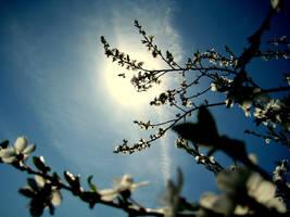Spring photo 2 by mistty002