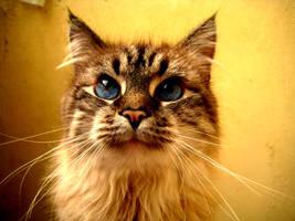 My kitty by mistty002
