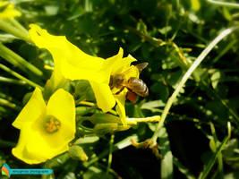 the..bee.. by ahdaiba
