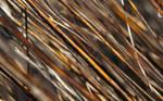Dry Stipes 2560x1600