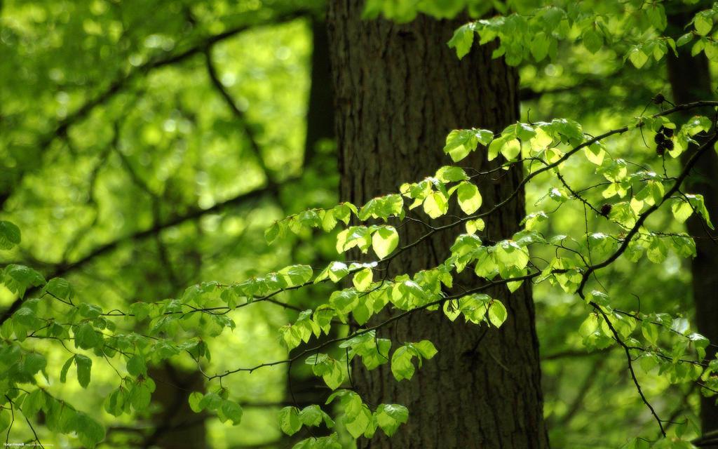 Green Leaves 2560x1600 by hermik