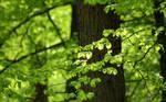 Green Leaves 2560x1600
