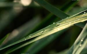 Green Blade 2560x1600 by hermik