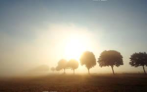 Morning Light 2560x1600 by hermik