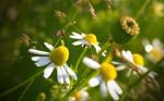 Wiesenblumen 2560x1600