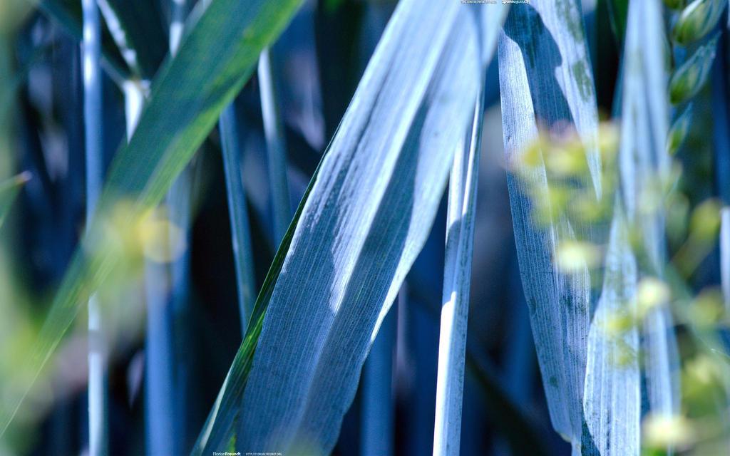 Blue Shades 2560x1600 by hermik