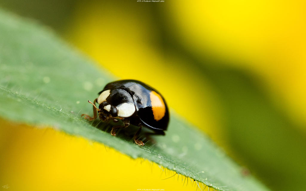 Bug 2560x1600 by hermik