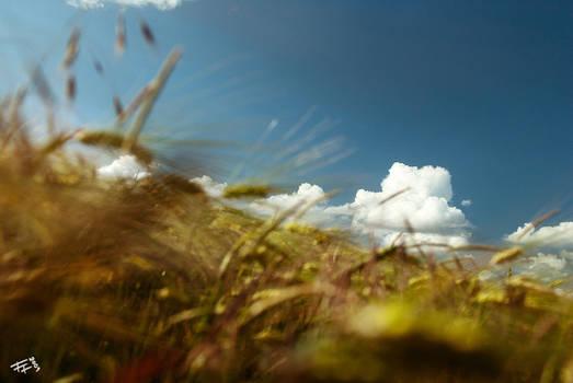 summer's breeze closer