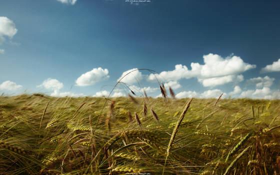 summer's breeze 2560x1600