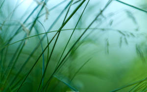 Green Blur 2560x1600 by hermik