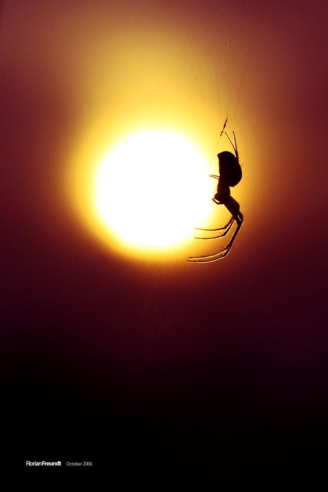 sunwalker by hermik