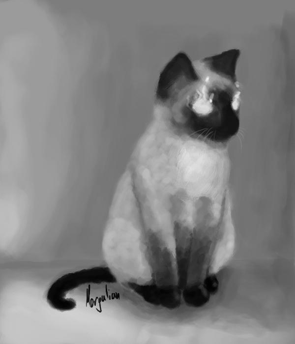 Siamese cat by Morgulian