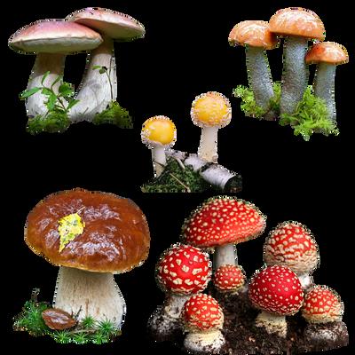 Mushrooms png by Mumuza