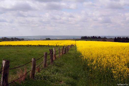 2010: landscape 02