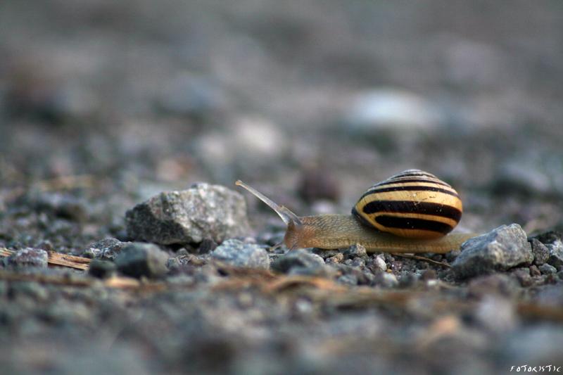 2010: snail 01 by fotoristic
