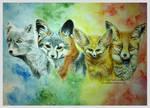 The Fox Seasons