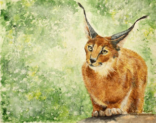 Caracal by Olvium