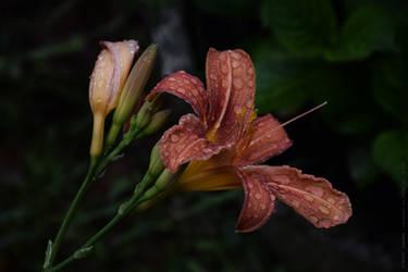 Flower by vincentjongman
