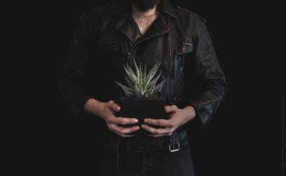Plant by vincentjongman