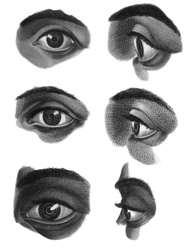 Free Vintage Eye Anatomy Illustration Brushes by The-Graffical-Muse ...