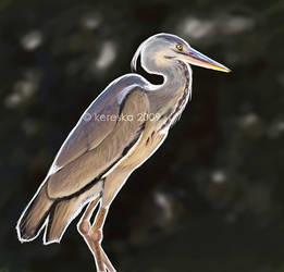 heron version 2009