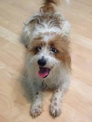 My oldest dog by puppiesarecute122415