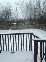 It snowed in my backyard by puppiesarecute122415