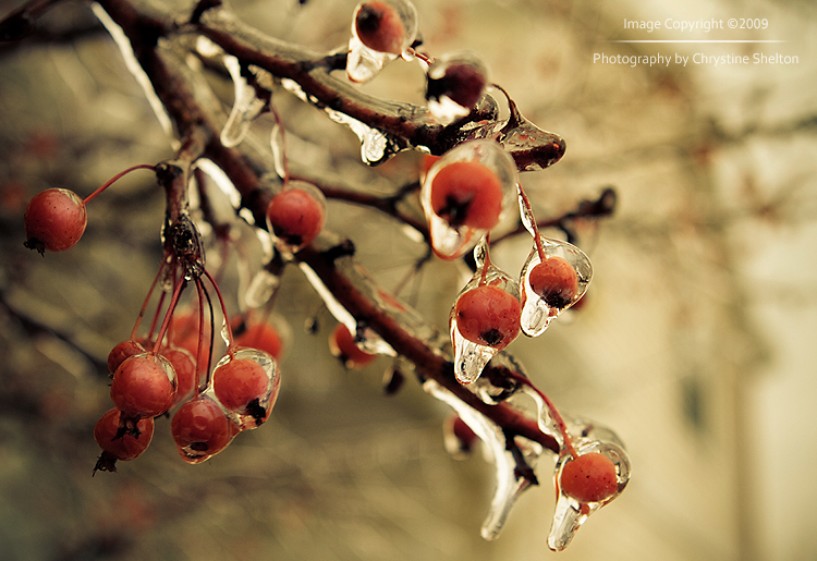 Ice Storm by chrystine