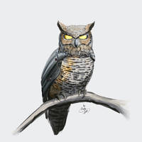 Augmented owl 01