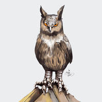 Augmented owl 03