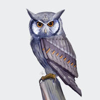 Augmented owl 05
