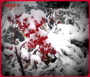 Imbolc con Neve by Fayewiccan