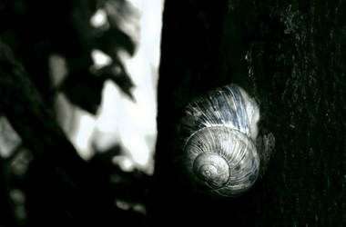 life's spiral.. by ain-al-farashi