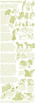 Species Anatomy Tut/Guide by Hauket