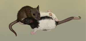 Baby Rats Study