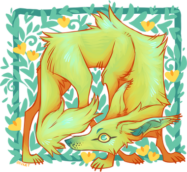 Weird Coyote