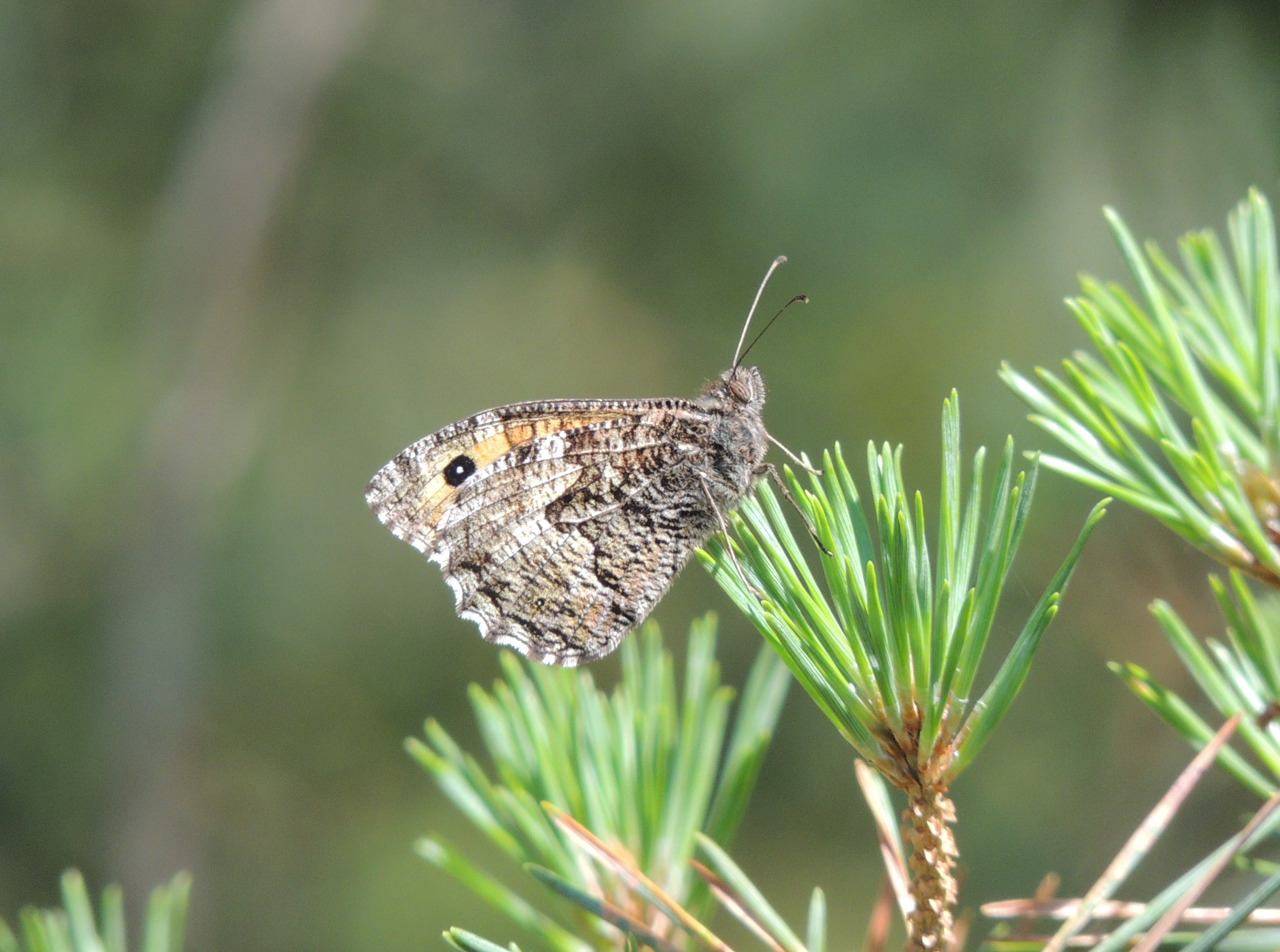 grayling chat sites Download royalty-free images, high resolution stock photos, vector art and illustrations from thinkstock  high quality, affordable stock photography subscriptions.