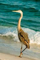 Heron on the Beach - 2 by Dragonpyro0085